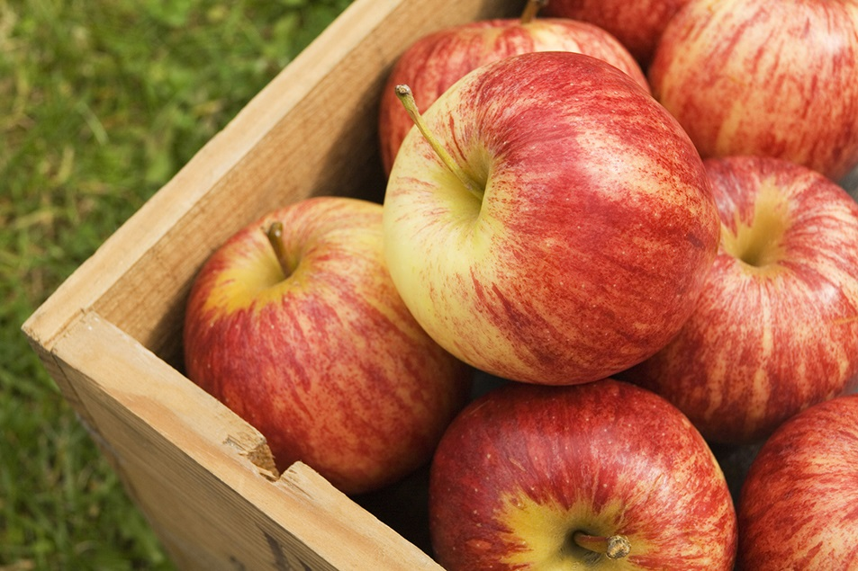 quercetin in apples