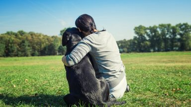 Fun in the sun: Summer safety tips for your pet