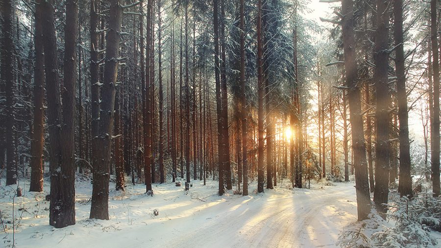 Winter scenery in forest