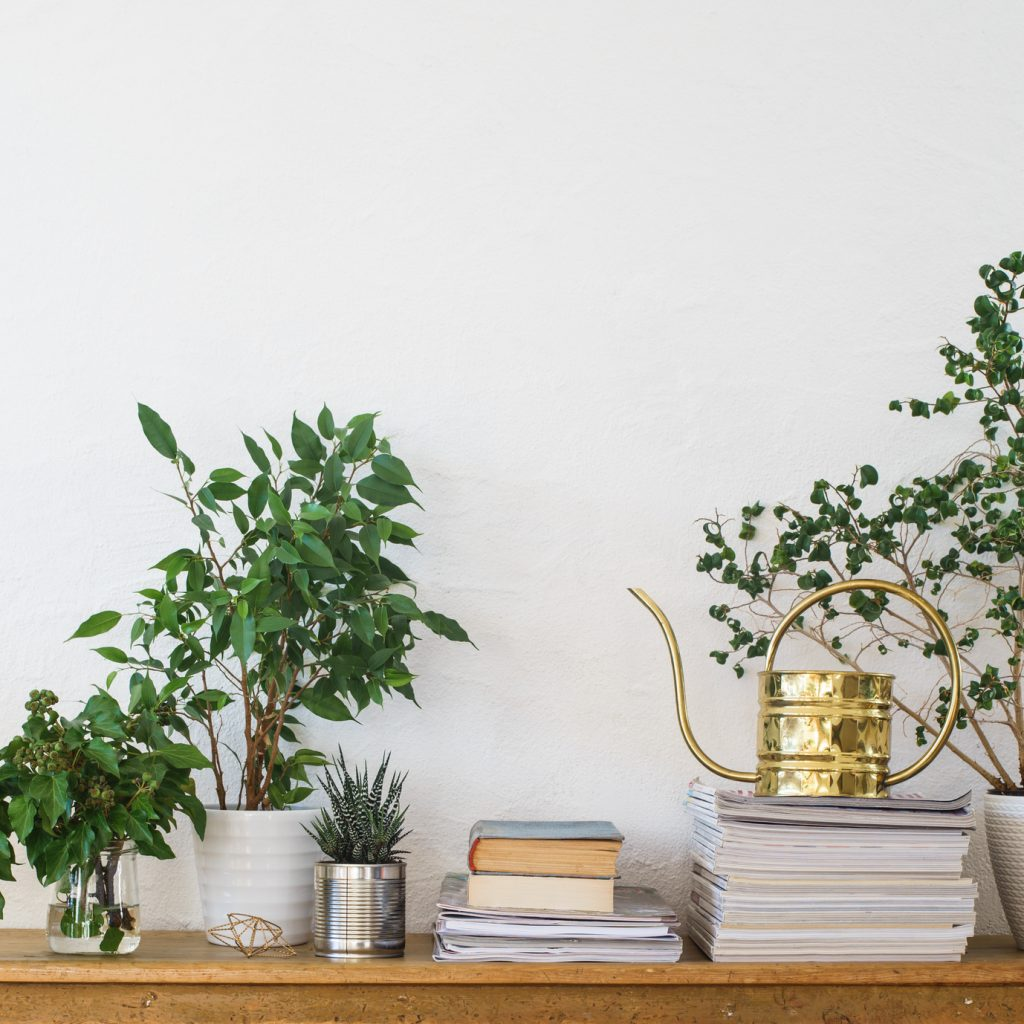 A tidy desk with plants and books