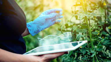 What is Gene Editing and How Could it Impact our Food?