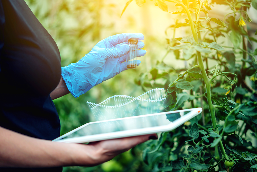 Woman testing plant for the presence of genetic modification.