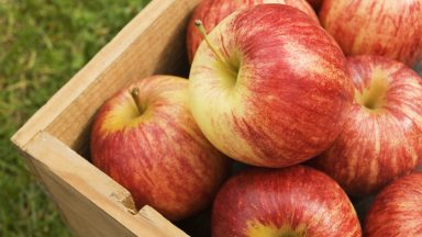 First Genetically Modified Apples Could be Sold in Canada