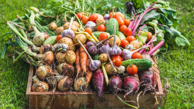 Reap the Benefits of Seasonal Local Eating