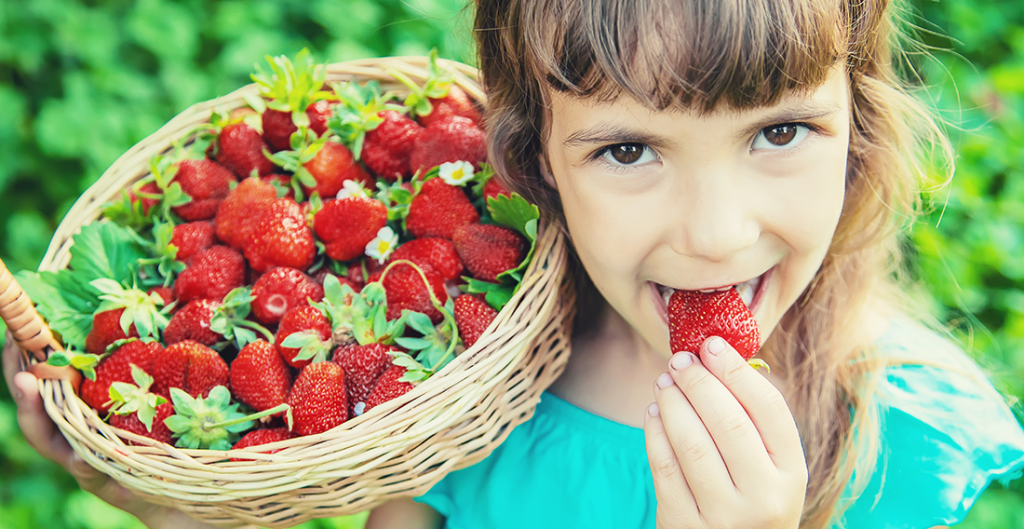 Little Girl Picking and eating Fresh strawberries